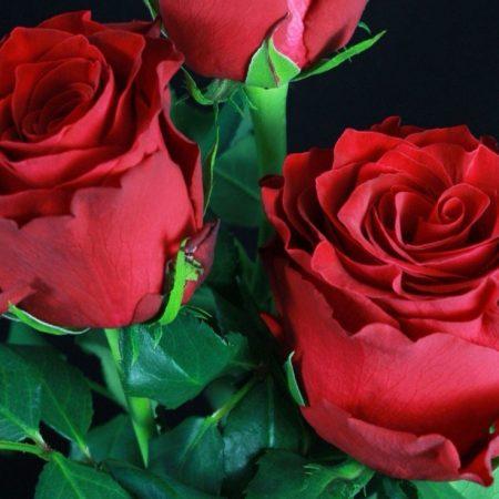votre artisan fleuriste vous propose le bouquet : Rose Rouge