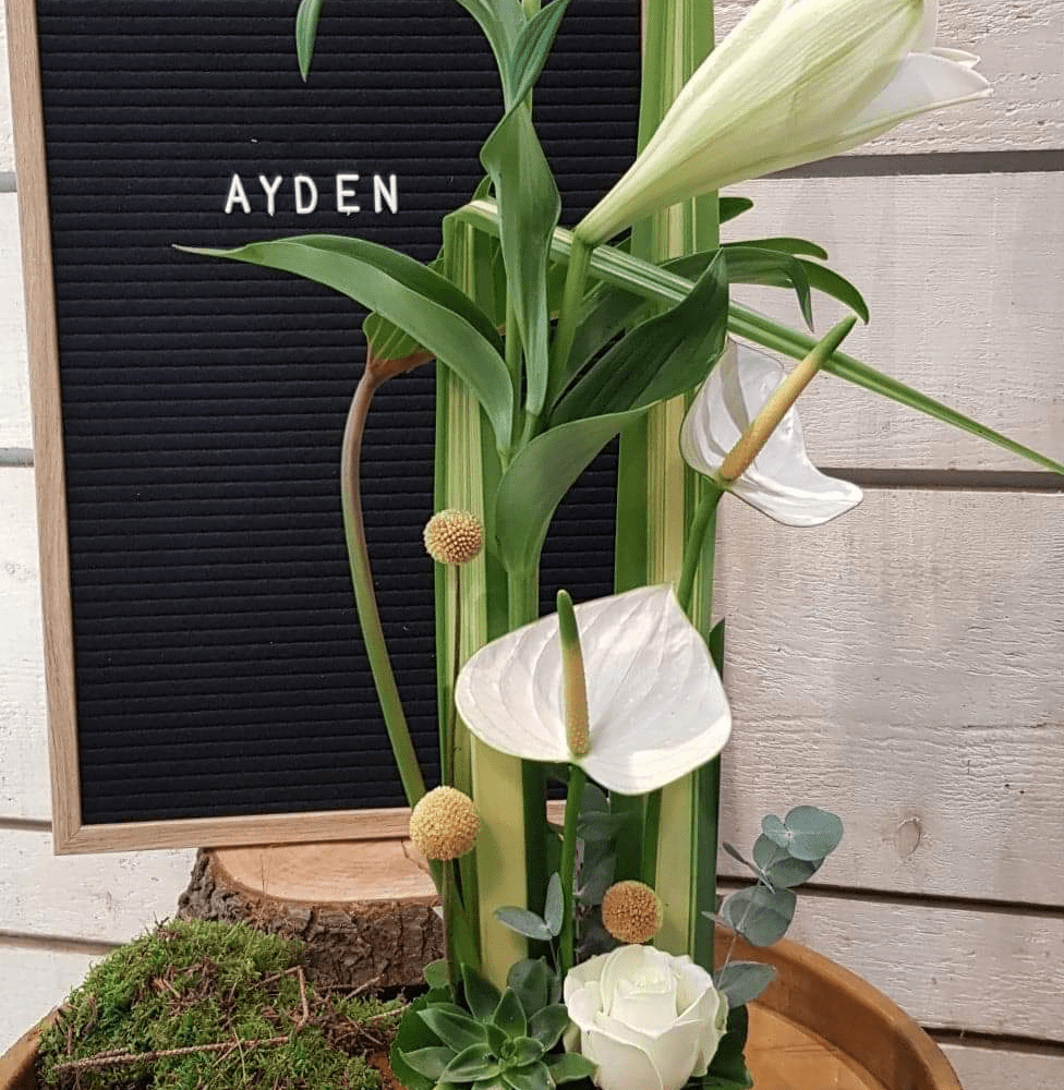 Composition Ayden