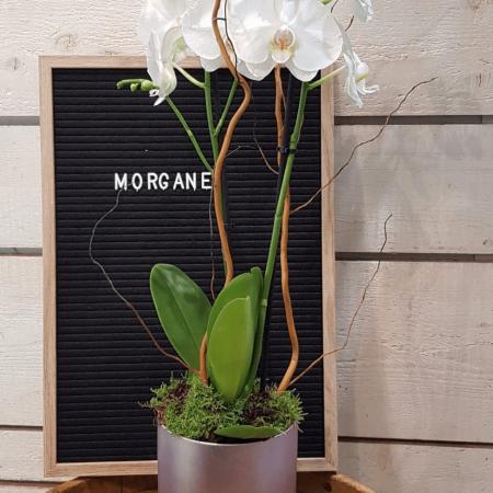 votre artisan fleuriste vous propose le bouquet : Orchidée Morgane