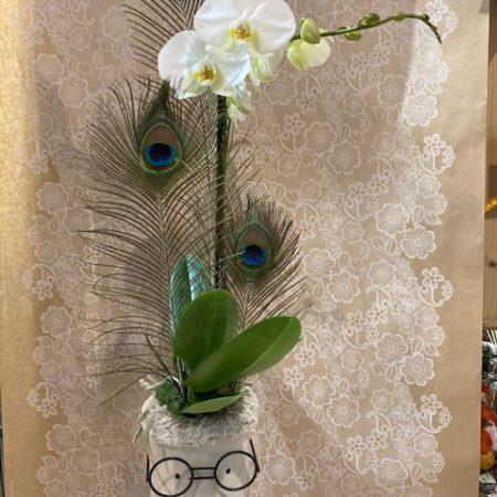"""votre artisan fleuriste vous propose le bouquet : Orchidée Phalaenopsis en cache-pot """"Tendance"""""""