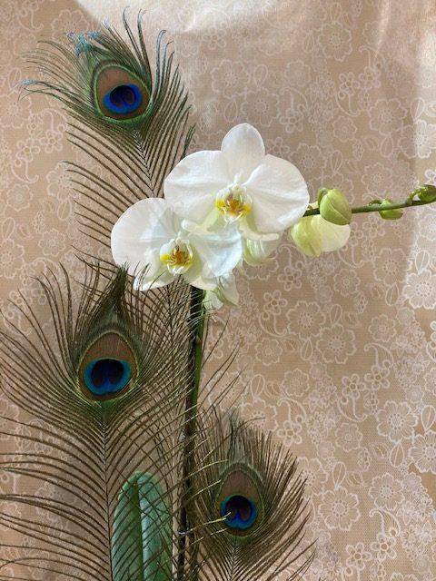 Orchidée Phalaenopsis en cache-pot