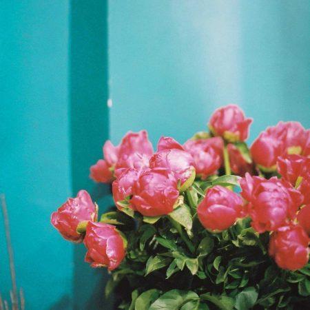 votre artisan fleuriste vous propose le bouquet : Pivoines