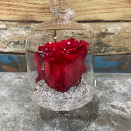 votre artisan fleuriste vous propose le bouquet : rose rouge stabilisée en cloche