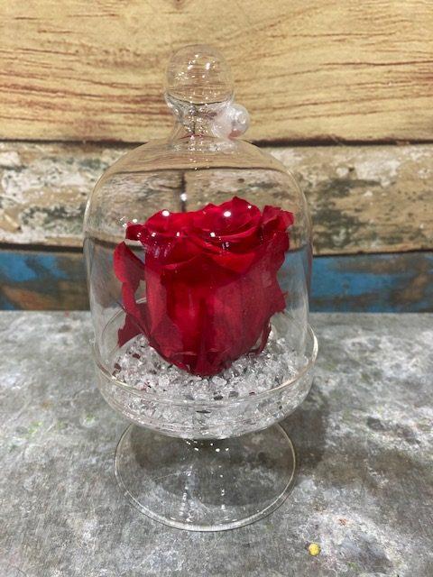 rose rouge stabilisée en cloche