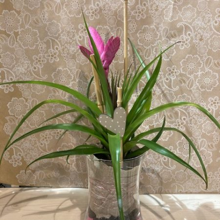 votre artisan fleuriste vous propose le bouquet : Tilllandsia en verrerie