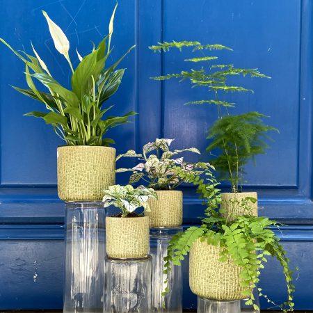 """votre artisan fleuriste vous propose le bouquet : Plante verte """" Surprise de l'artisan """""""